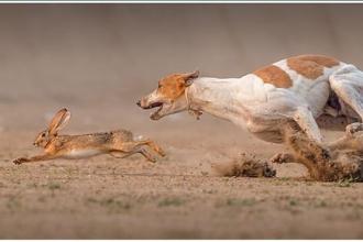 """Bài học hay về lương thưởng qua câu chuyện """"Thợ săn quản lý bầy chó"""""""